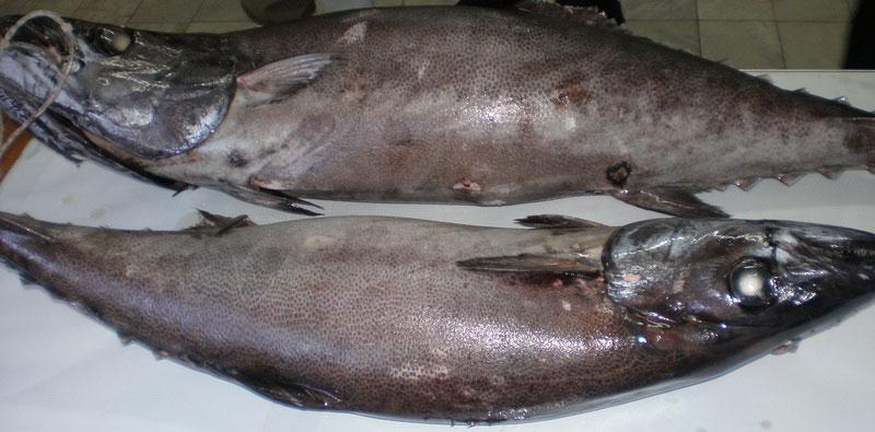рувета рыба фото идеально дополнит вкус